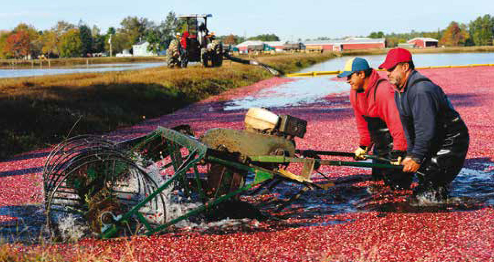Oregon Cranberry Farmers